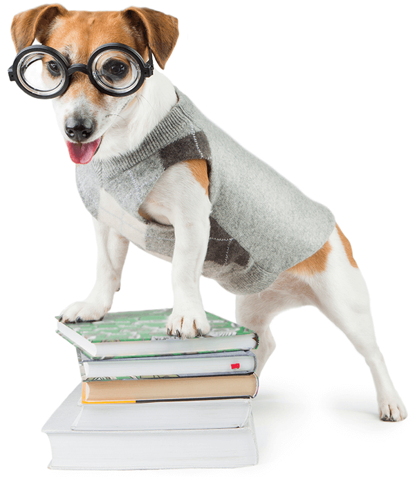 A small dog wearing glasses with his two front paws on a pile of book looking eager to learn